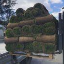 Рулонные газоны Сочи. Красиво и удобно