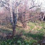 Уютный садовый участок 6 соток