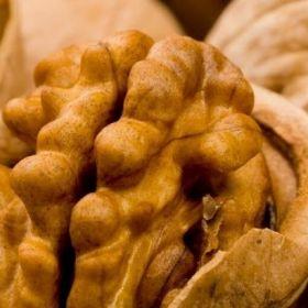 Саженцы грецкого ореха от производителя